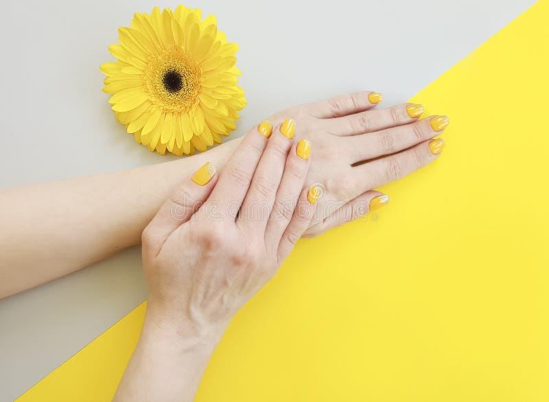 Mains femelles manucure, fleur de gerbera sur un fond coloré photo libre de droits