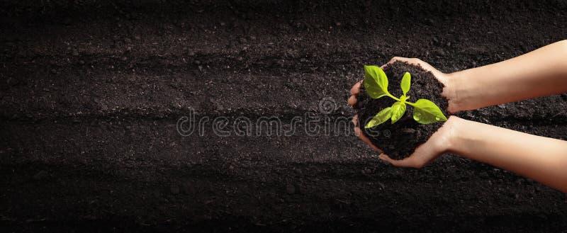 Mains femelles plantant de jeunes usines Concept de jardin images libres de droits