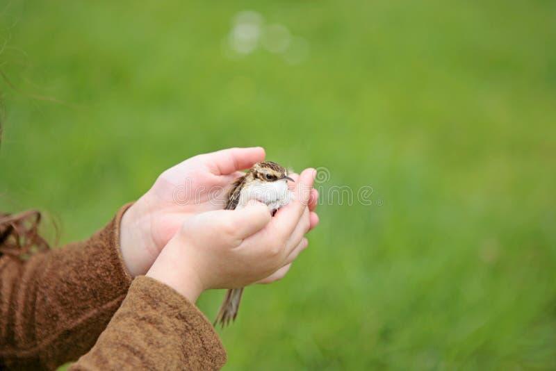 Mains humaines d'enfant tenant un petit oiseau comme dans un nid photographie stock