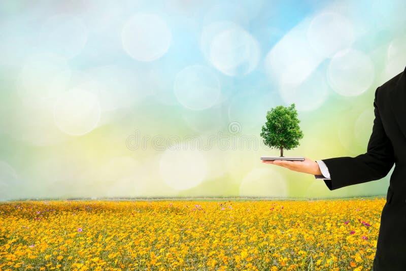 Mains humaines de concept d'écologie tenant le grand arbre d'usine avec photographie stock libre de droits
