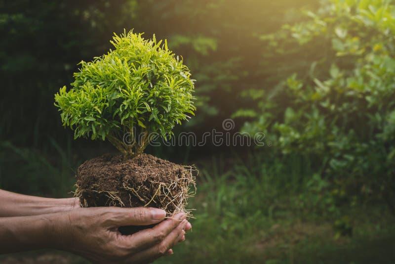 Mains humaines tenant le petit concept vert de flore Écologie concentrée photos libres de droits