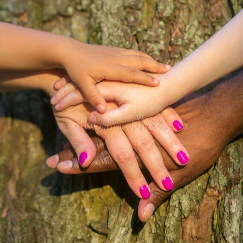 Mains mélangées de famille sur l'écorce d'arbre image libre de droits