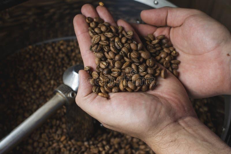 Mains pleines avec des grains de café juste rôtis images stock