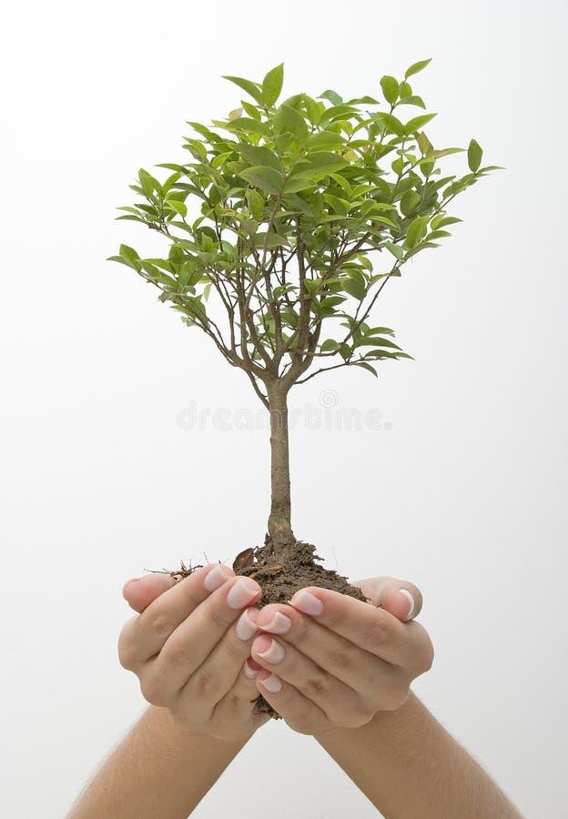 Mains retenant l'arbre image stock