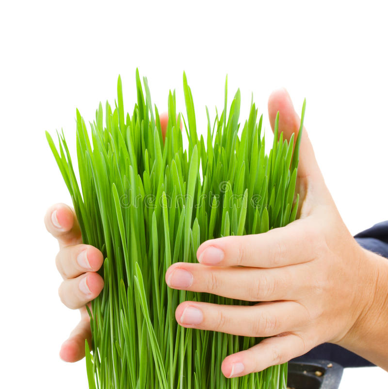 Mains retenant l'herbe photos stock