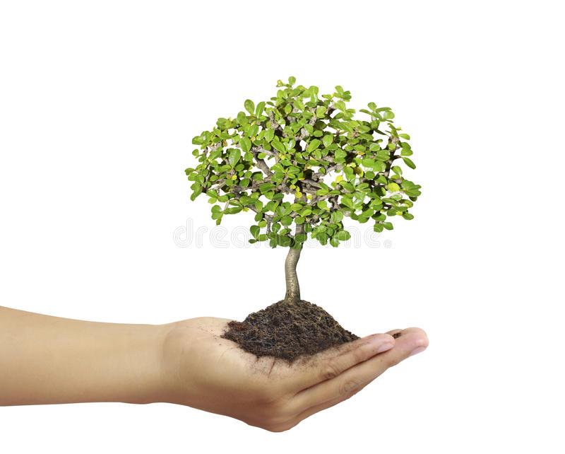 Mains retenant un arbre photos libres de droits