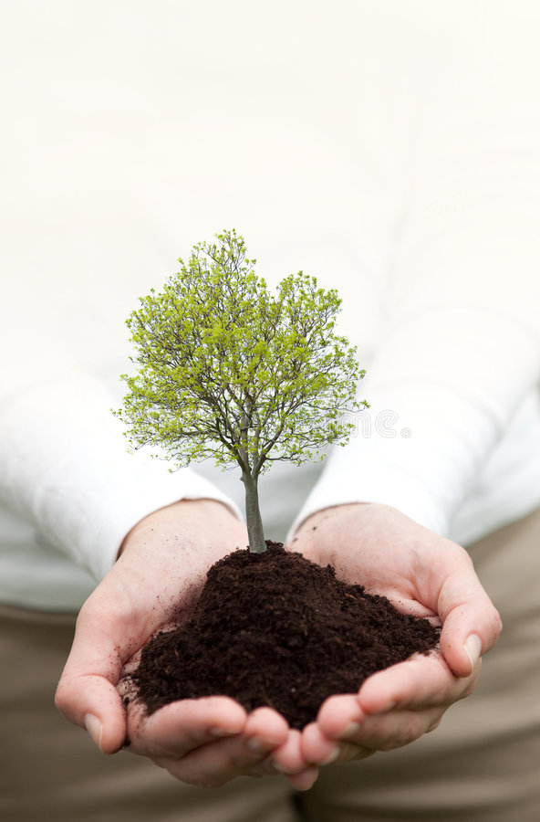 Mains retenant un arbre photo stock