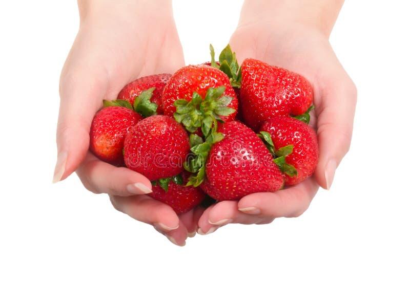 Mains tenant des fraises photos stock