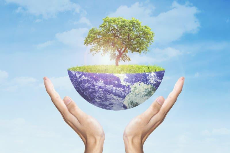 Mains tenant la terre avec l'arbre photo stock