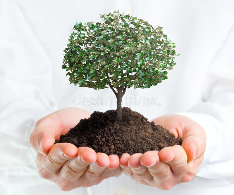 Mains tenant un arbre avec l'argent photo stock
