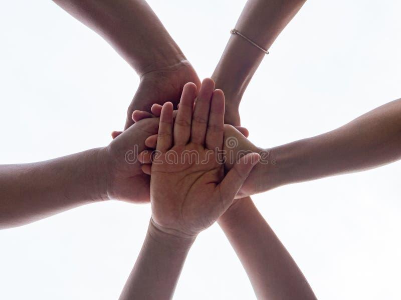 Mains unies par plan rapproché sur le fond blanc Uni, amitié, Te images stock