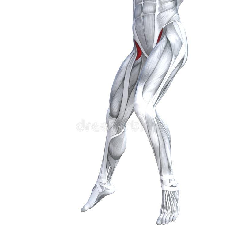 Mais baixa anatomia dianteira do ser humano do pé ilustração stock