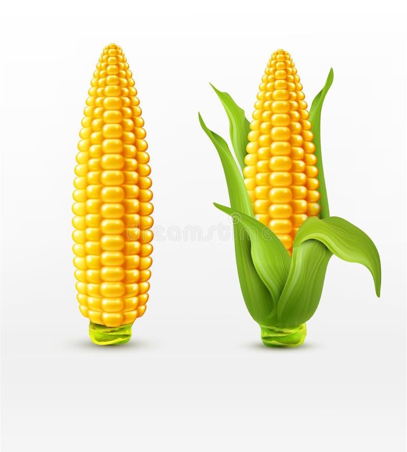 Mais des Vektors zwei Maiskörner mit Blättern Vektorbild, Abbildung stock abbildung