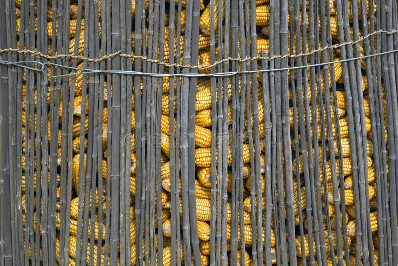 Mais in einem Bambuszaun lizenzfreie stockfotos