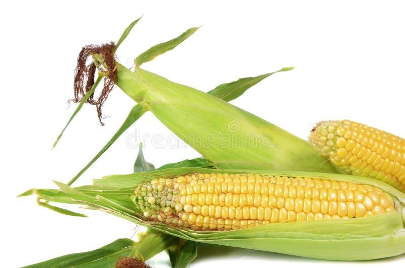 Mais reif und süß stockbild