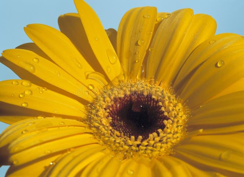 Mais retratos da flor! imagens de stock royalty free