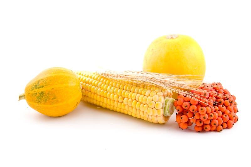 Mais, Weizen und Kürbis stockfotos