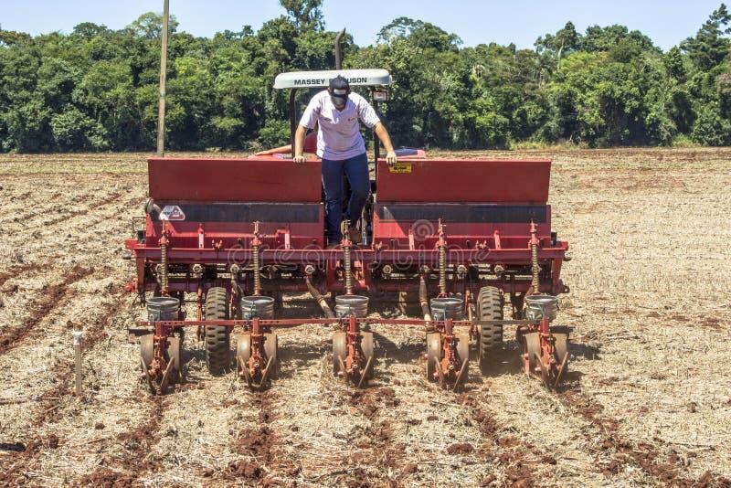 Maisanbau in Bela Vista do Paraiso, nördliche Region des Bundesstaates Parana lizenzfreie stockfotografie