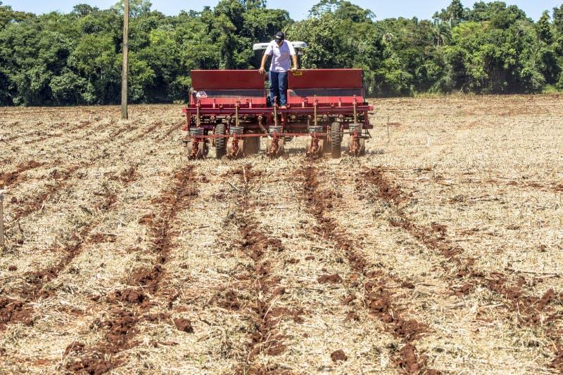 Maisanbau in Bela Vista do Paraiso, nördliche Region des Bundesstaates Parana lizenzfreie stockbilder