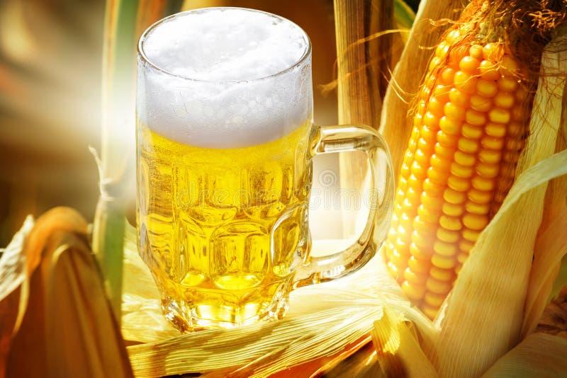 Maisbier, Glas Bier und Mais lizenzfreie stockbilder