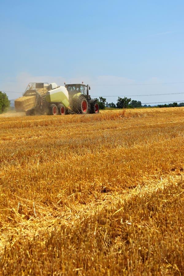 Maisfeld des maschinellen Erntens der Erntemaschinenlandwirtschaft goldenes reifes Traktor - Heu und Stroh, traditioneller Sommer lizenzfreies stockfoto