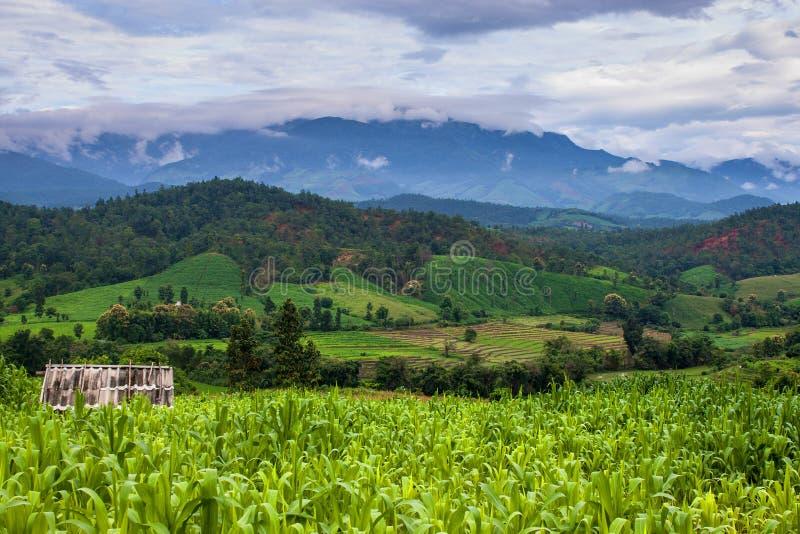 Maisfelder und -berge lizenzfreie stockfotografie