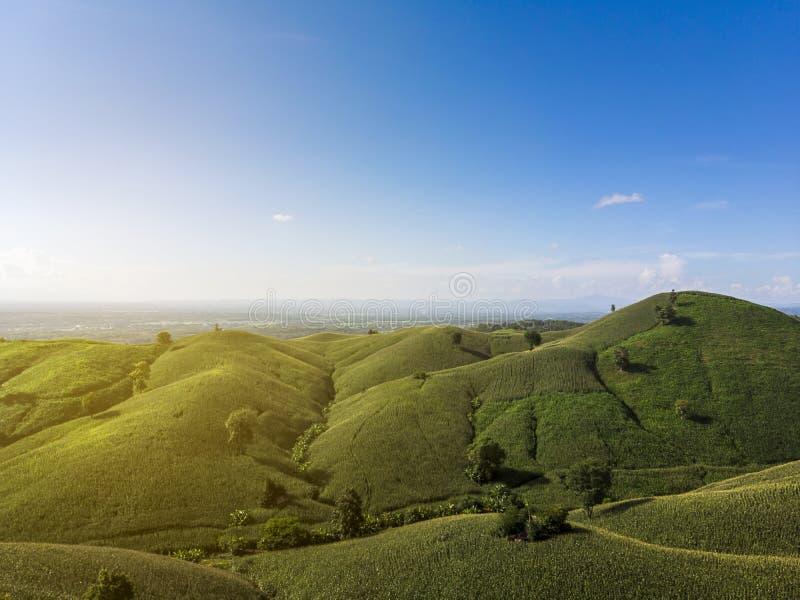 Maisindustrie auf dem Berg in Thailand stockbilder
