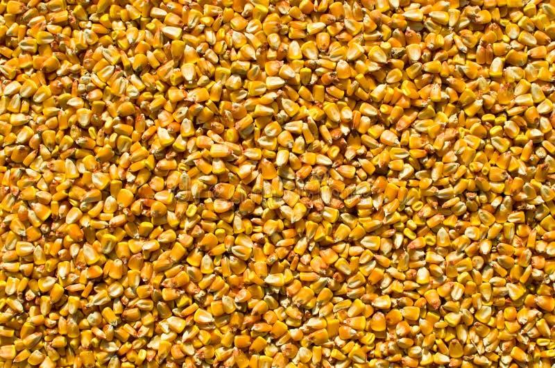 Maiskerne lizenzfreies stockbild