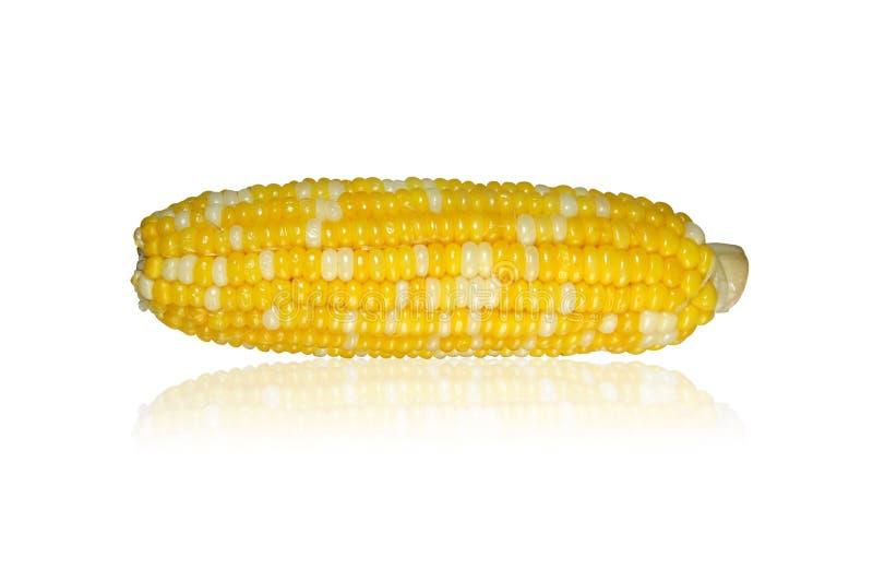 Maiskolben auf weißem Hintergrund stockfotografie
