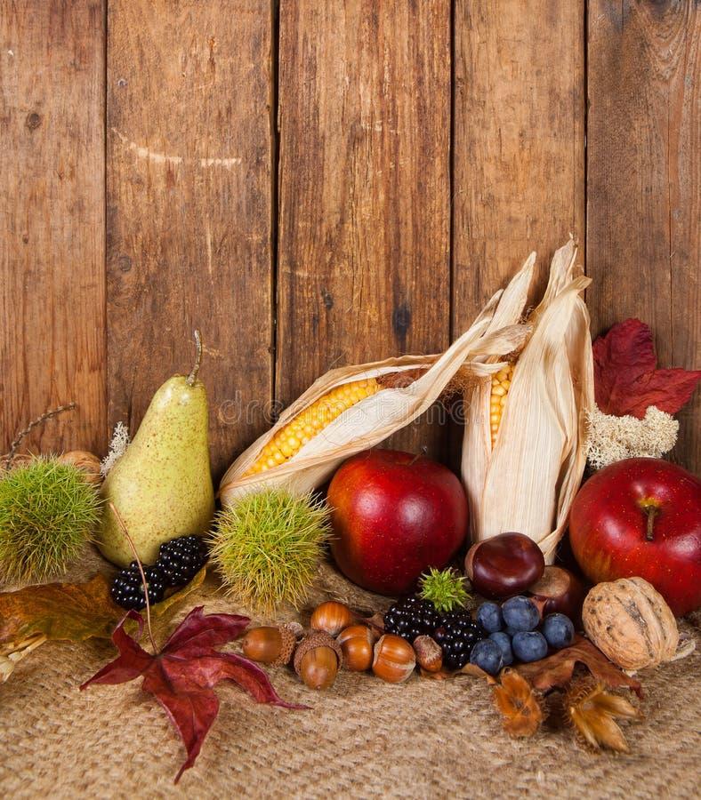 Maiskolben und Herbstfrüchte stockbild