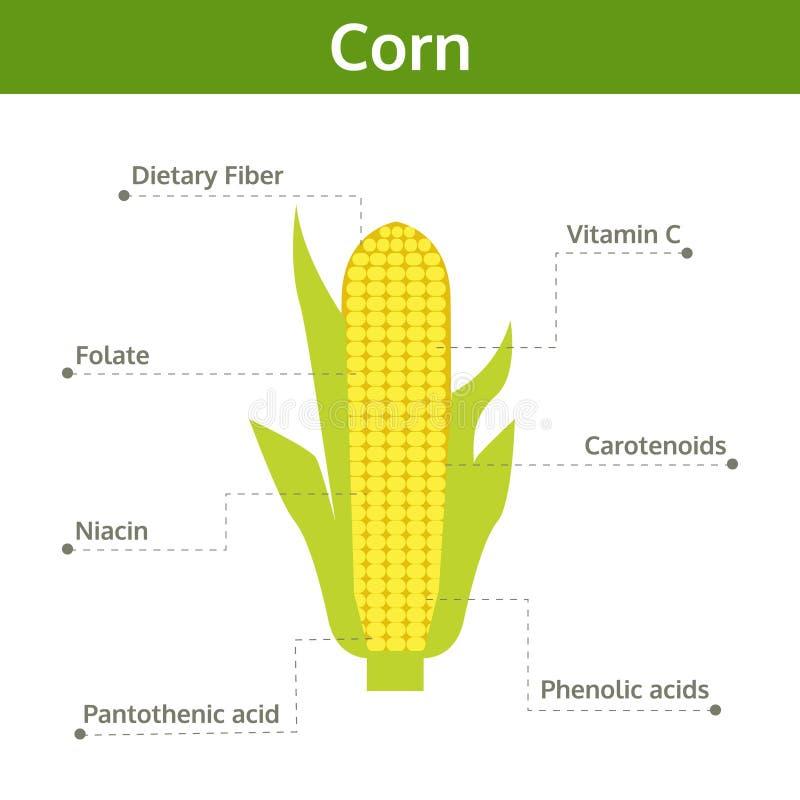 Maisnährstoff von Tatsachen und von Nutzen für die Gesundheit, Informationsgraphik lizenzfreie abbildung