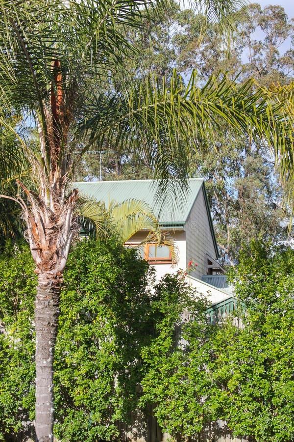 Maison australienne vue par les arbres avec le palmier dans des arbres de premier plan et de gomme derrière jpg images libres de droits