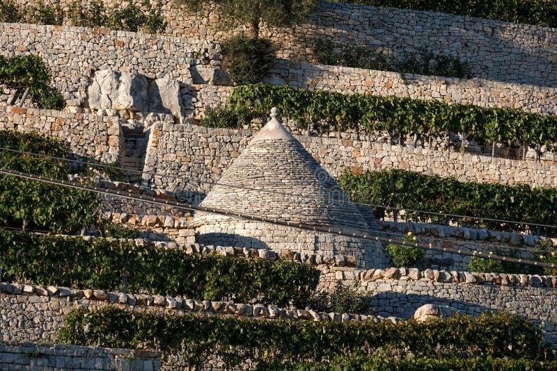 Maison blanchie traditionnelle de trulli avec le toit conique situé sur une terrasse en dehors de la ville de Locorotondo dans la photos stock