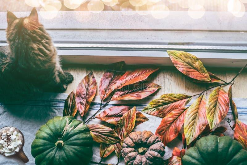 Maison confortable d'automne Le chat se repose par la fenêtre avec de divers potirons et feuilles colorés de chute photographie stock libre de droits