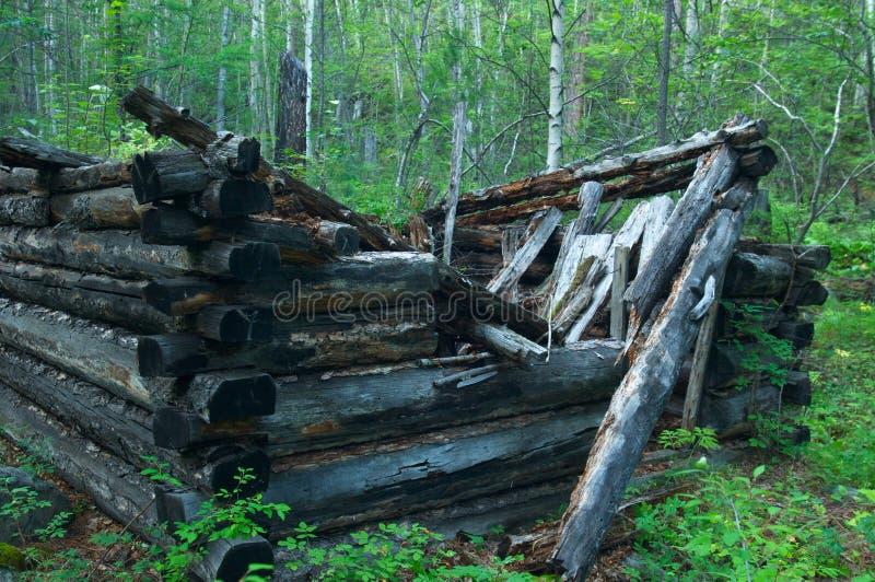 Maison détruite de barre dans la forêt de mélèze images libres de droits