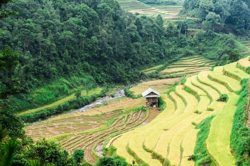 Maison d'échasse sur les terrasses de riz classées image libre de droits