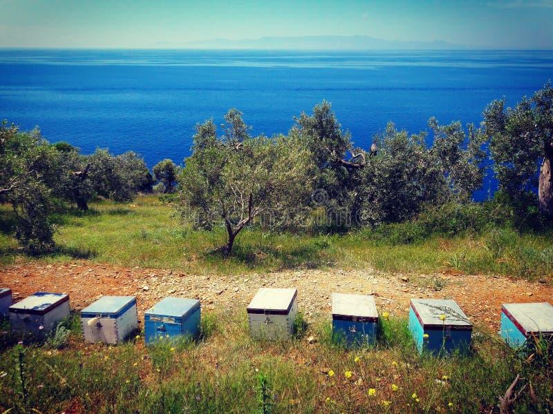 Maison d'abeille photo stock