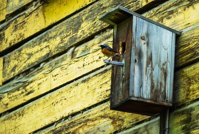 Maison d'oiseau avec l'oiseau se reposant sur le poteau photo stock