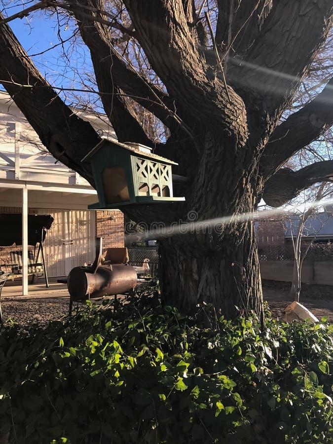 Maison d'oiseau dehors photos libres de droits