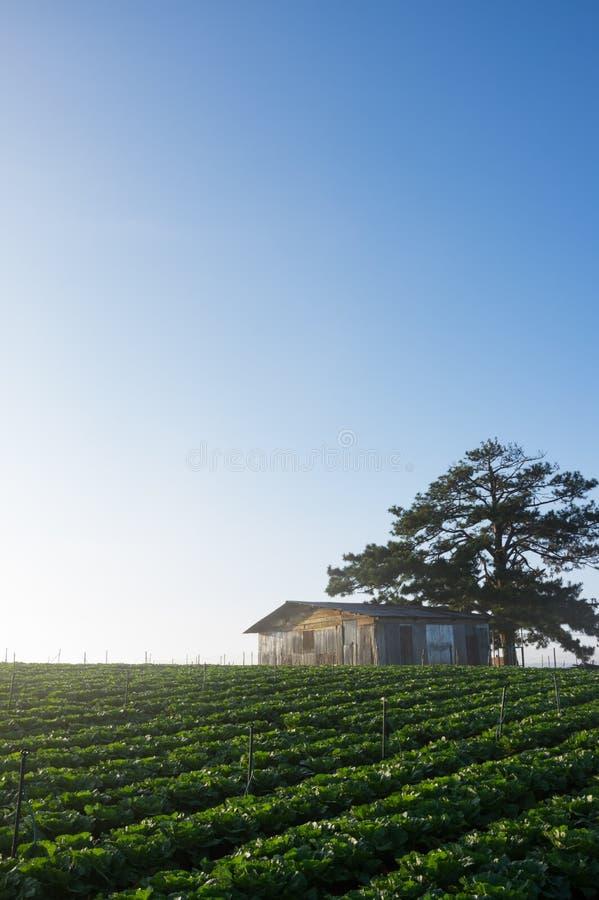 maison dans la savane avec la ferme de légume frais et le ciel bleu, tellement très beautifful photos stock