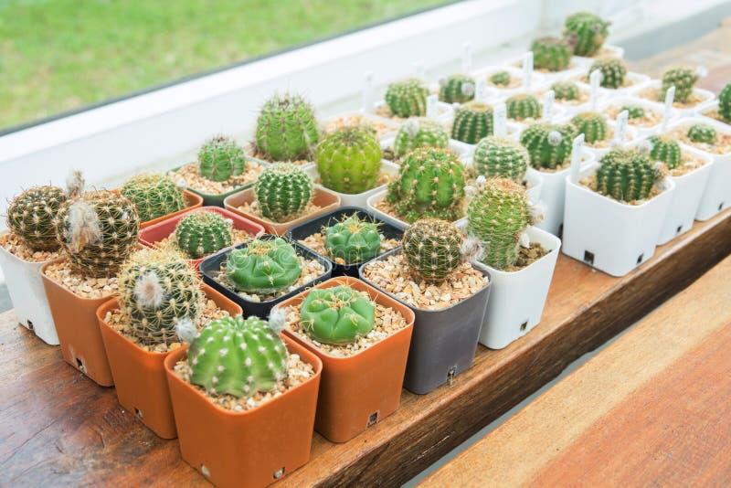 Maison de Cactus images stock