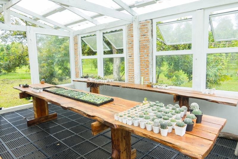 Maison de Cactus photo stock