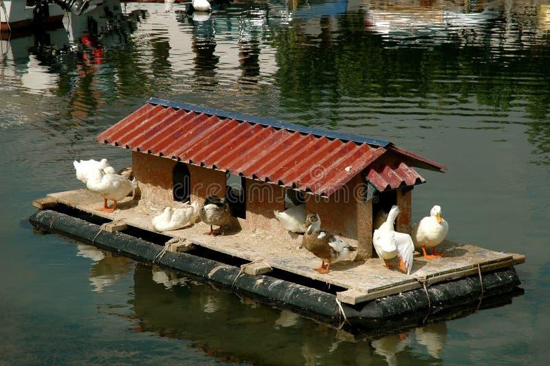 maison de canard photographie stock