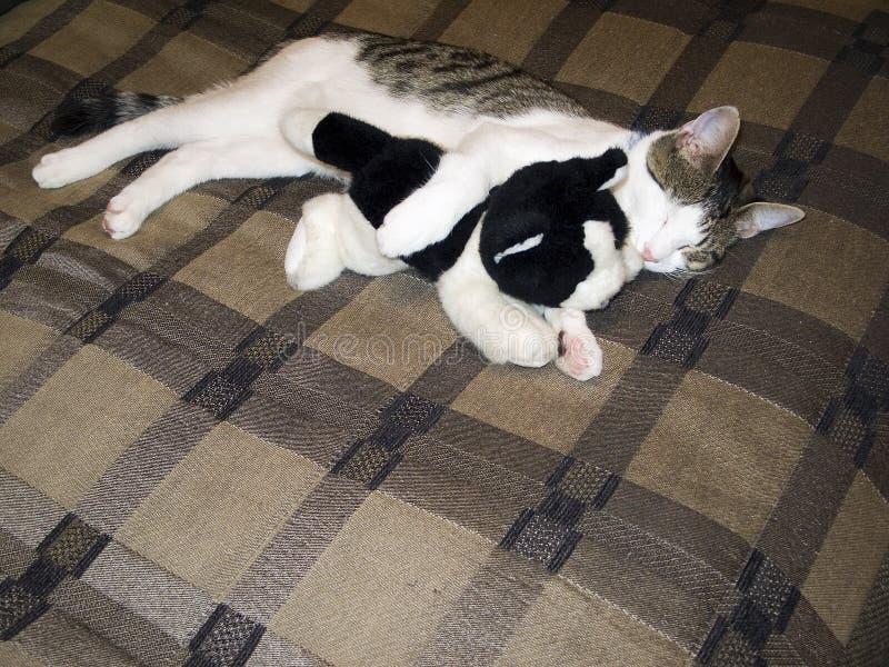 maison de chat photo stock