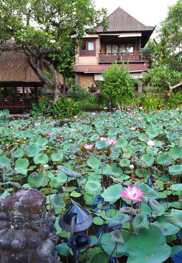 Maison de hôtes avec l'étang de lotus photographie stock libre de droits