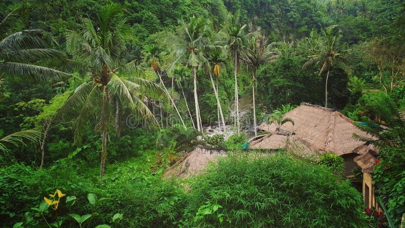 Maison de jungle images stock