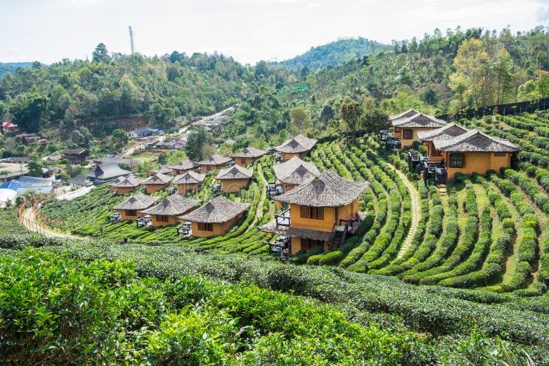 Maison de terre de station de vacances de point de vue dans la plantation de thé à l'interdiction r de vin de lie photographie stock libre de droits