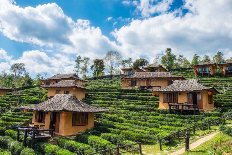 Maison de terre de station de vacances de point de vue dans la plantation de thé à l'interdiction r de vin de lie photo libre de droits