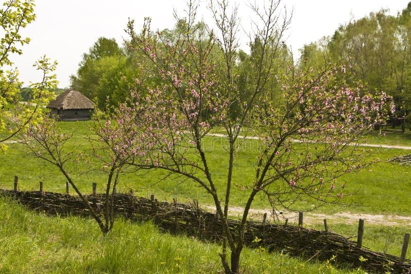 Maison de village au printemps photographie stock libre de droits