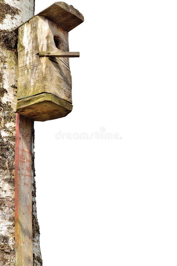 Maison en bois d'oiseau d'étourneau, grand tronc d'arbre de bouleau, d'isolement images stock
